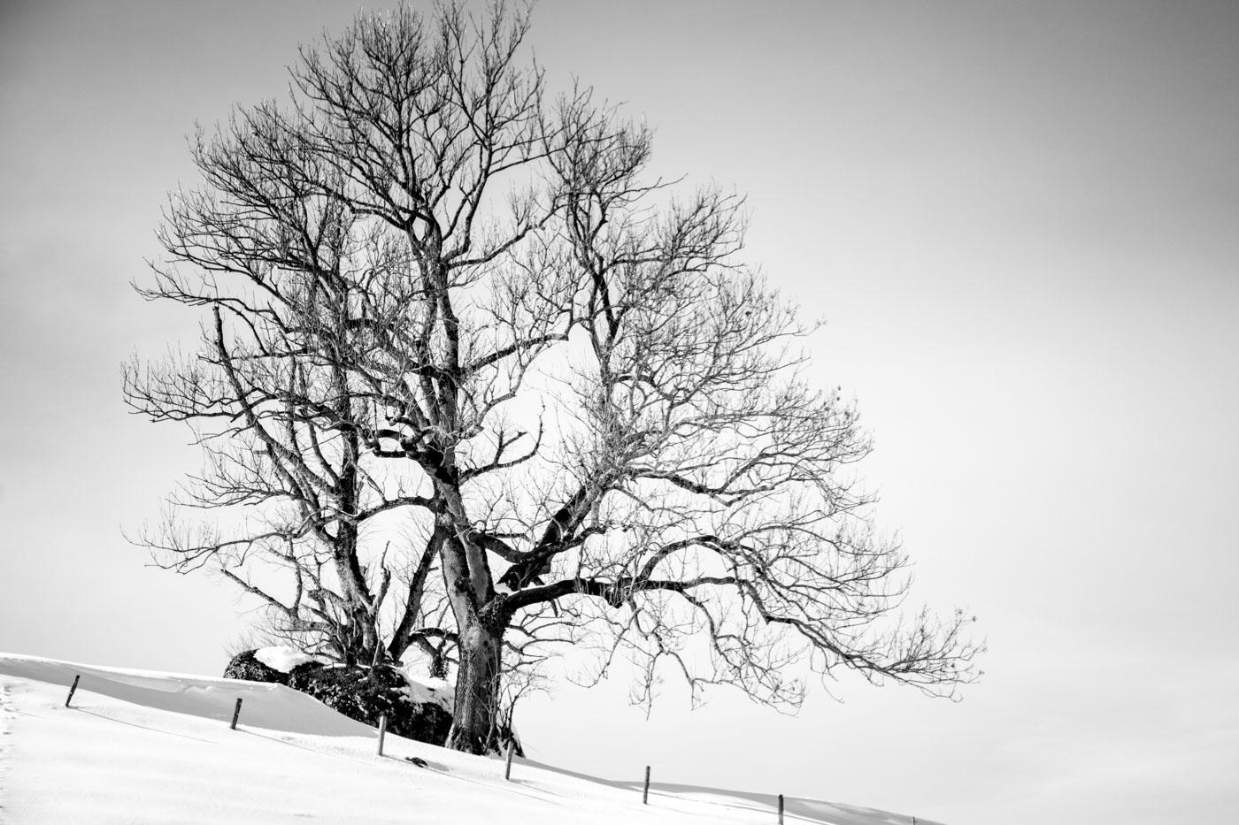 Schnee, Zugerberg